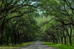 Wormsloe Plantation || Savannah