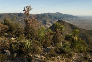 High Desert || Real de Catorce