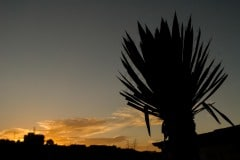 High Desert Sunset || Real de Catorce