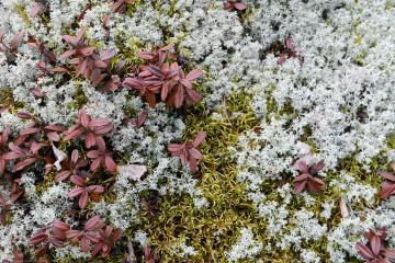 Moss and Lichen || Finland