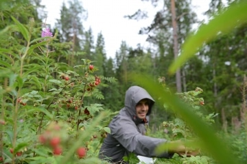 Picking Raspberries || Finland