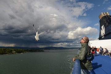 Seagull and Storm || Oslofjord