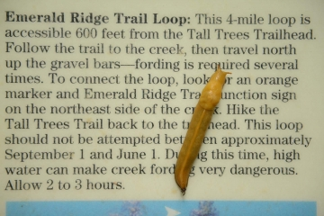 Banana Slug at Emerald Ridge Trail || Redwood National and State Parks, CA