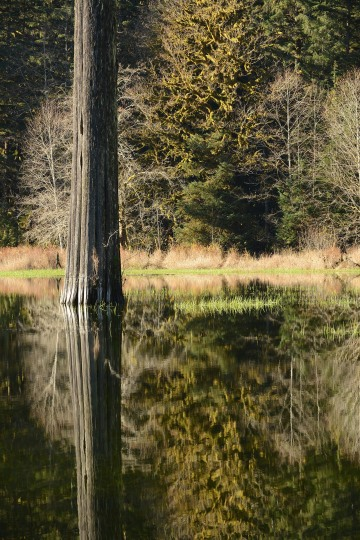 Elk Lake in the Hoh Rain Forest || Olympic National Park, Washington