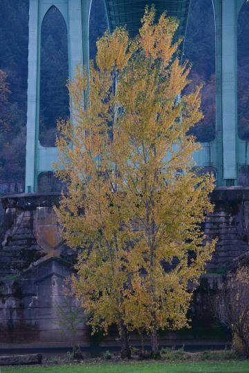Fall at Cathedral Park || Portland