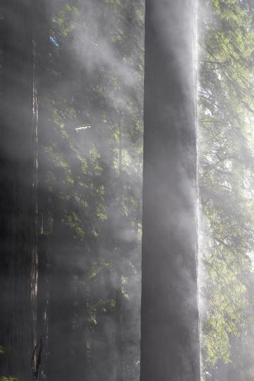 Fern Canyon Hike || Prairie Creek Redwoods State Park, CA