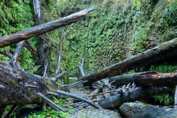 Fern Canyon || Prairie Creek Redwoods State Park, CA