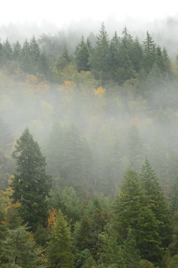 Fog in Smith River National Recreation Area || California