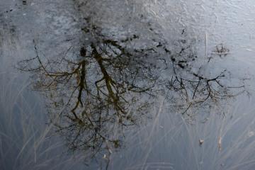 Frozen Reflections || Lake Quinault, WA