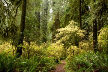 Hiking Among Giants || Jedediah Smith Redwoods State Park, CA