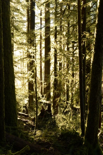 Hoh Rain Forest in Olympic National Park || Washington