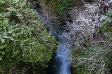 Lake Quinault || Olympic National Park, Washington