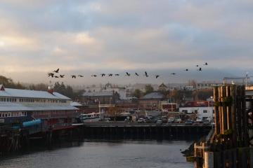 MV Coho Passenger - Vehicle Ferry || Port Angeles, WA
