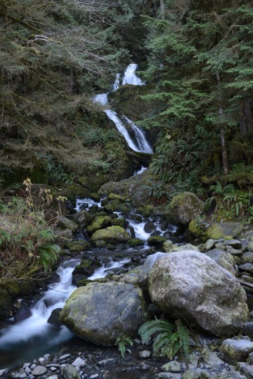 Merriman Creek || Olympic National Park, Washington