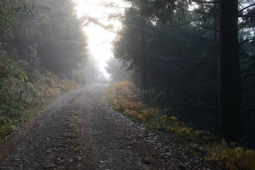 Morning Light in Rogue River-Siskiyou National Forest || Oregon