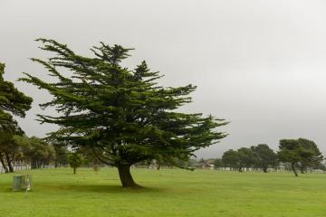 Pacific Coast Pine || Crescent City, CA