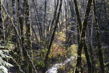 Rain Forest of Lake Quinault || Olympic National Park, Washington