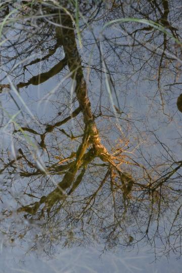 Reflections || Lake Quinault, Washington