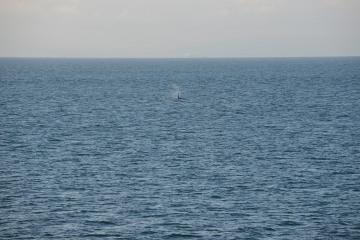 Sailing the Salish Sea || Strait of Juan de Fuca