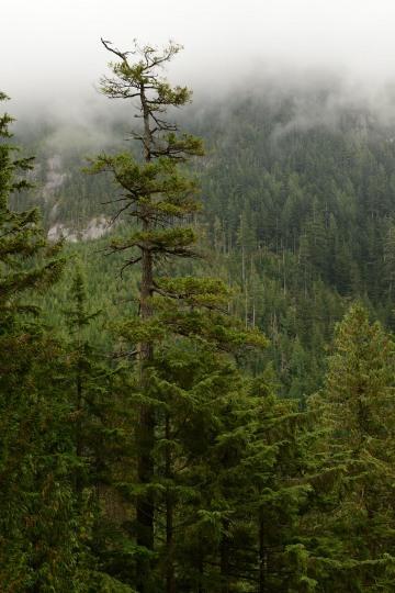 Stawamus Chief || British Columbia, Canada