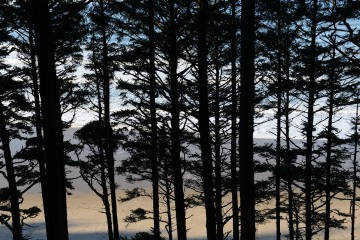 Sunrise through the Trees at Ecola State Park || Cannon Beach, OR