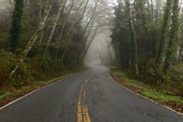 Tunnel of Trees along Newton B. Drury Scenic Pkwy || Prairie Creek Redwoods State Park, CA
