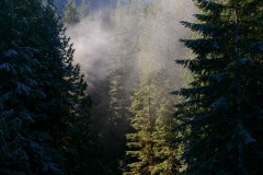 Morning Sun in Lake Quinault || Olympic National Park, Washington