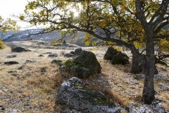 Trees and Rocks in First Snow || Cascade-Siskiyou National Monument, Oregon
