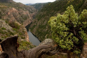 The Upper Reaches of the Gunnison || Curecanti National Recreation Area