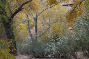 Soft Fall in Havasu Canyon || Havasupai Indian Reservation