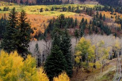 Fall Tracks  || Southern Rockies