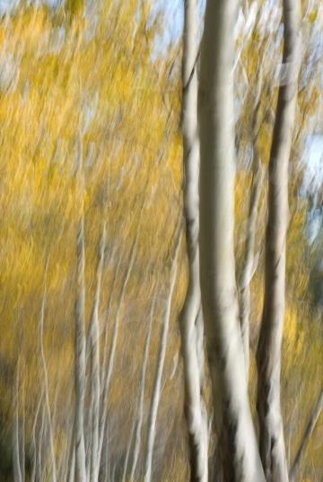 Autumn in the Tetons || Grand Teton NP