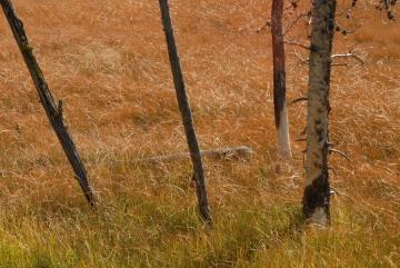 Fall Scene || Grand Teton NP