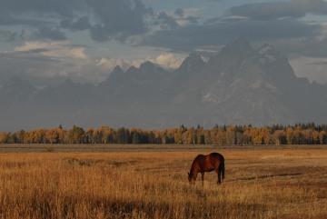 Horse in Tetons || Grand Teton NP