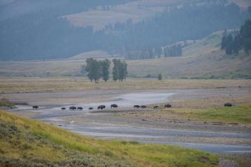 Lamar Valley || Yellowstone NP