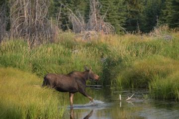 Moose Crossing River || Grand Teton NP
