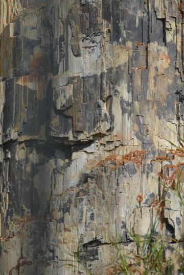 Petrified Tree || Yellowstone NP