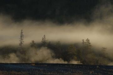Yellowstone Fog || Yellowstone NP