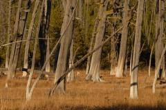 Fall at Yellowstone || Yellowstone NP