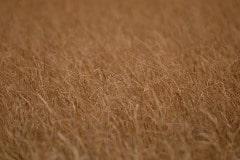 Grasses || Yellowstone NP