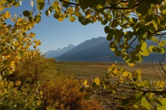 Tetons through Fall Foliage || Grand Teton NP