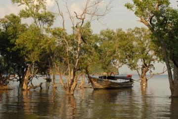 Mangroves in East Railay || Krabi