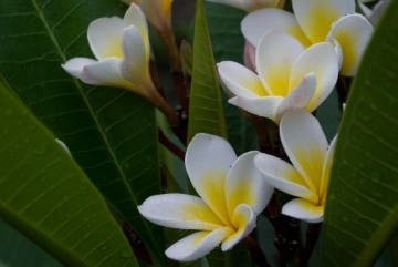 Morning Dew on Flowers || Pai