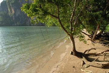 Morning Mangroves in Railay East || Krabi