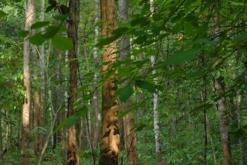 Pai Rainforest || Mae Hong Son