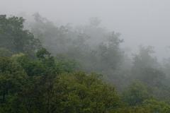 Thai Cloudforest || Mae Hong Son