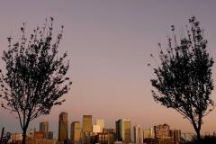 Glasshouse Skyline Flanked by Trees || Denver