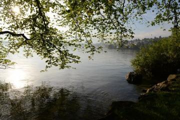 Calm Scene at Lake Lucerne || Switzerland
