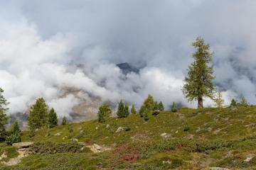 Matter Valley Pine || Zermatt, Switzerland