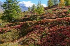 Alpine Forest    Zermatt, Switzerland